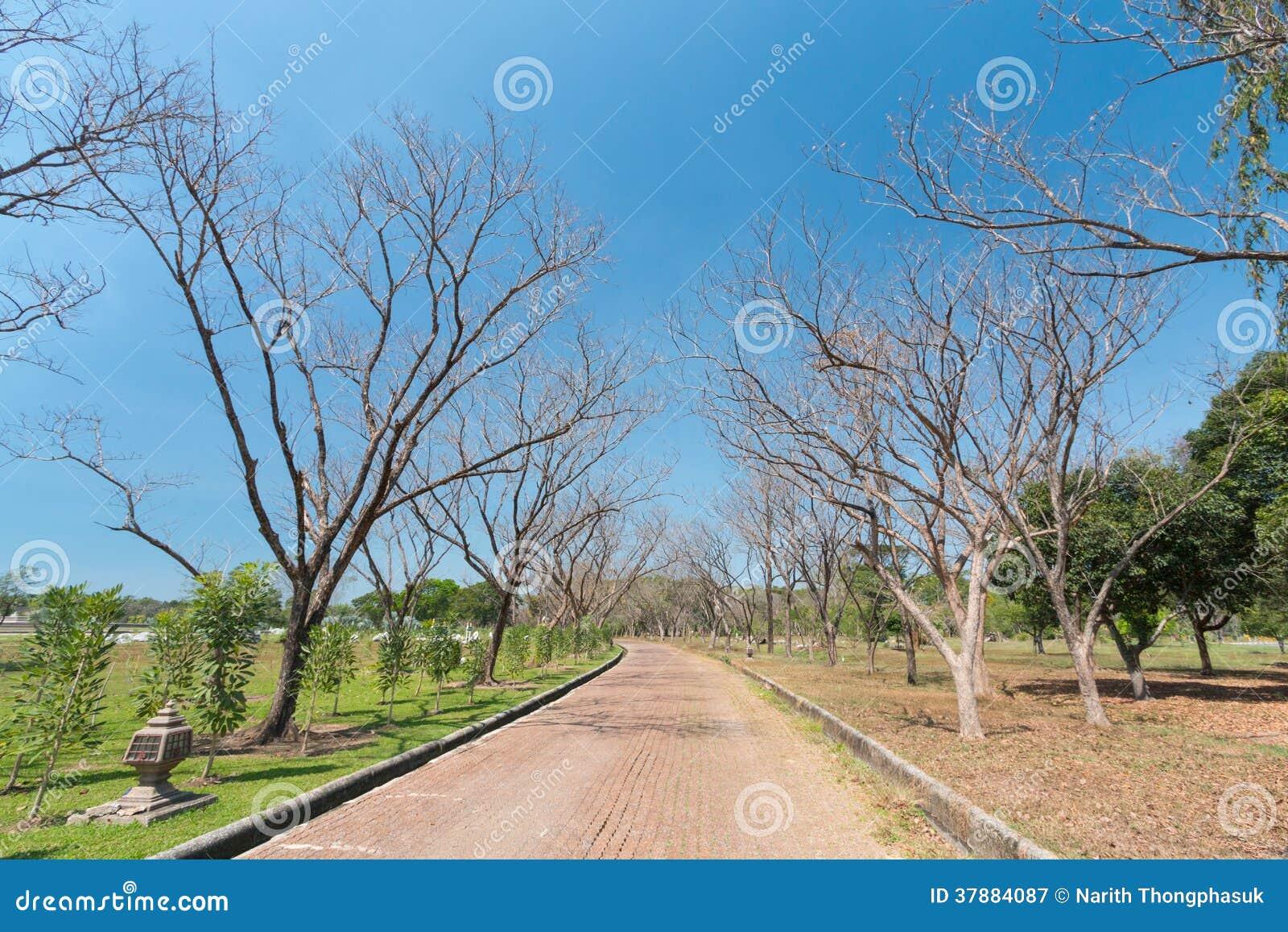 Dode boomweg