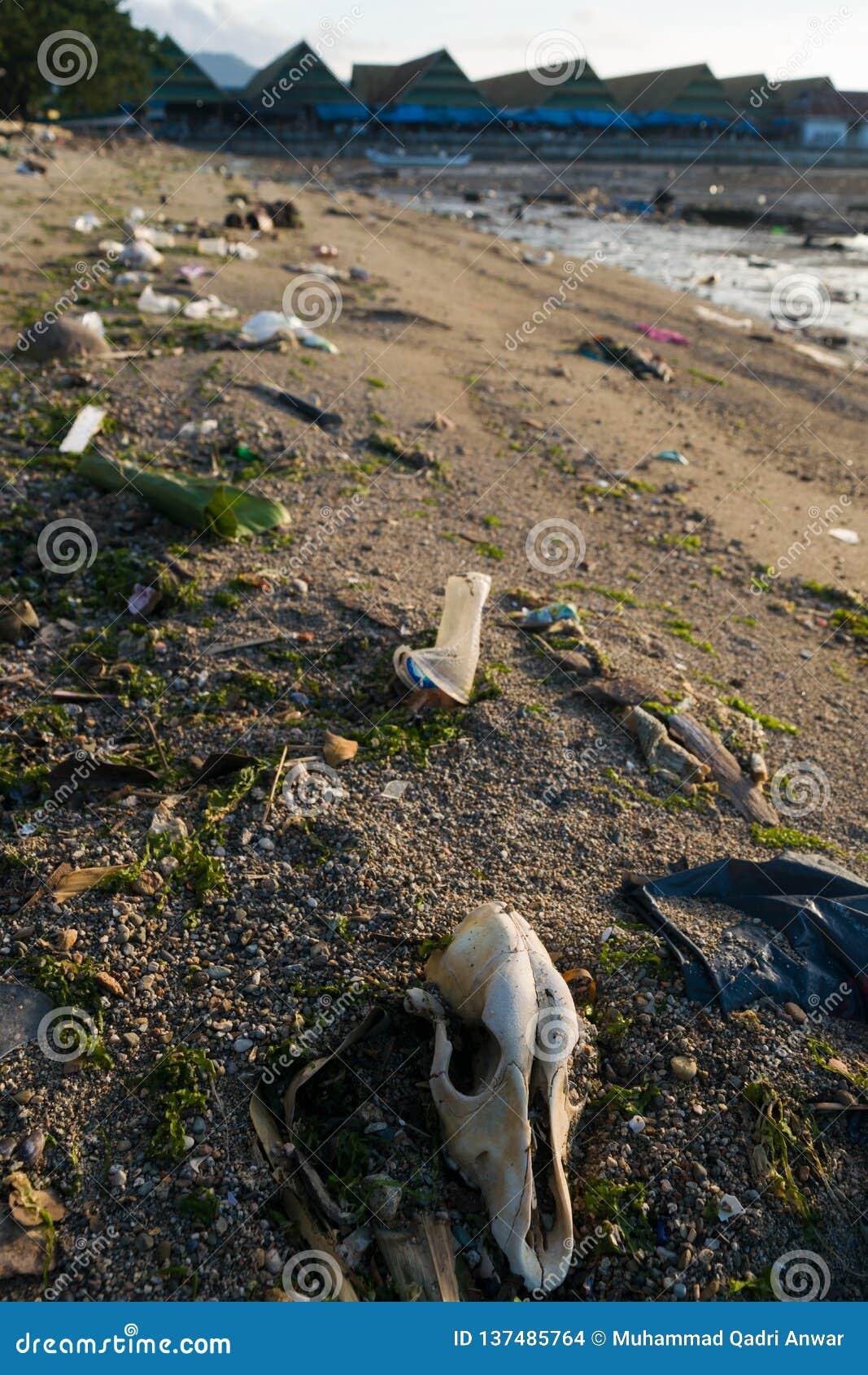Dode Dierlijke Schedel onder Afval op Kustlijn