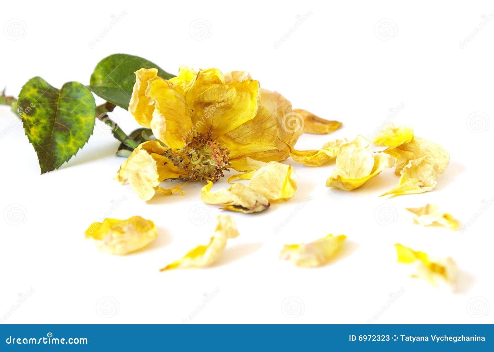 Dode geel nam toe