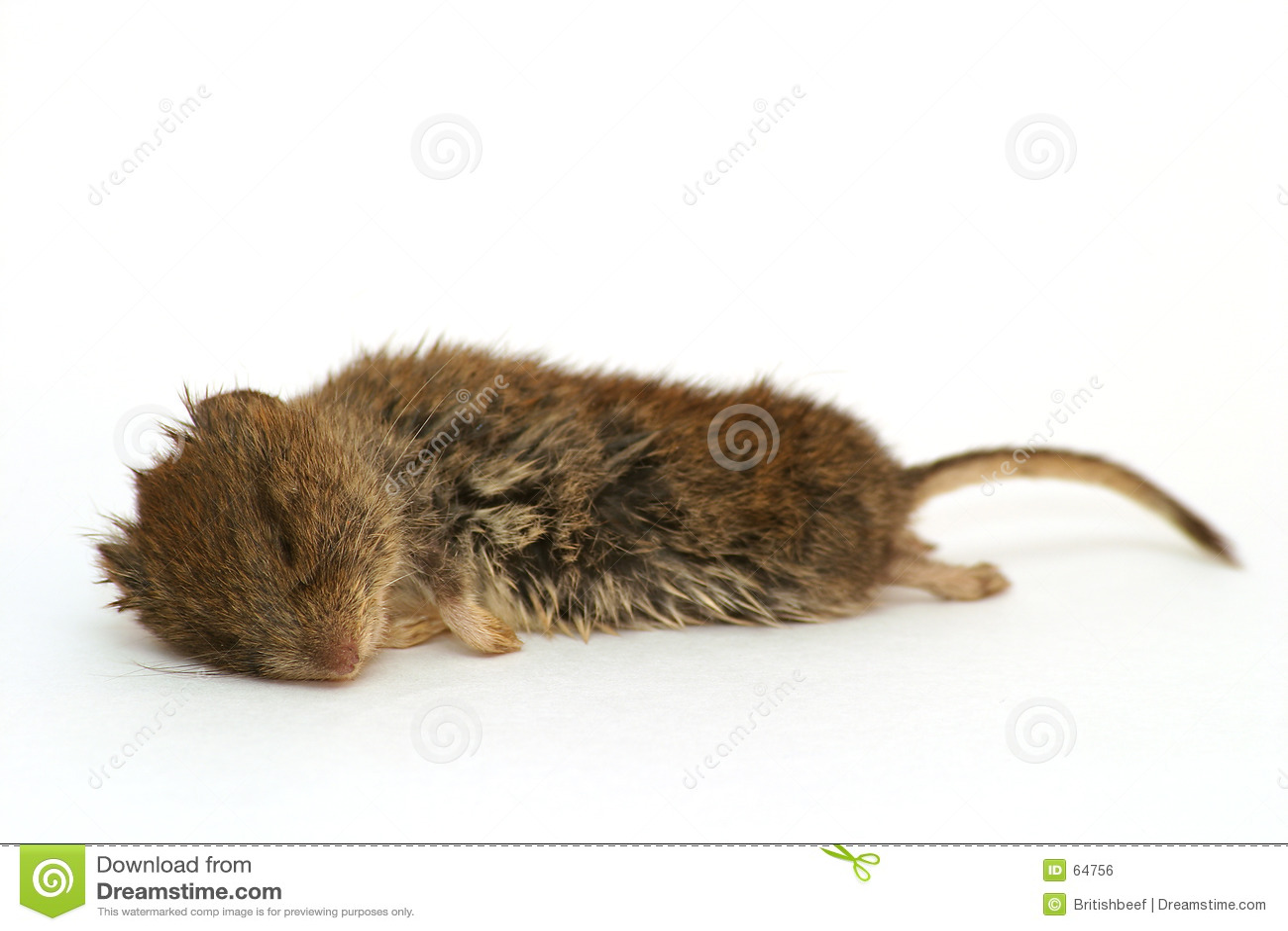 Dode houten muis