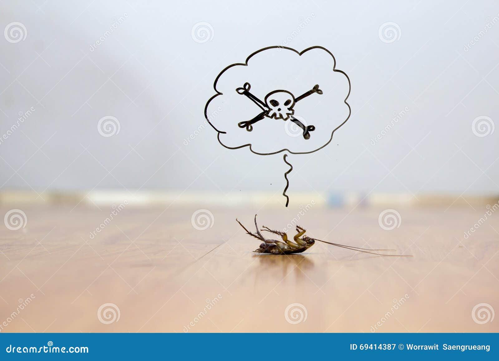 Dode kakkerlak op vloer, ongediertebestrijdingsconcept