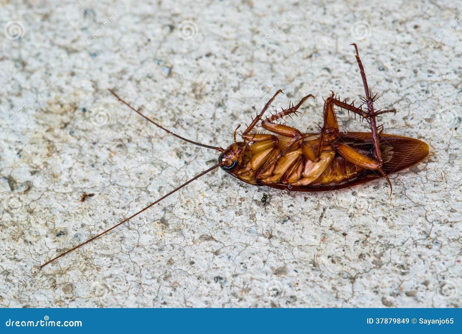 Dode kakkerlak op witte achtergrond