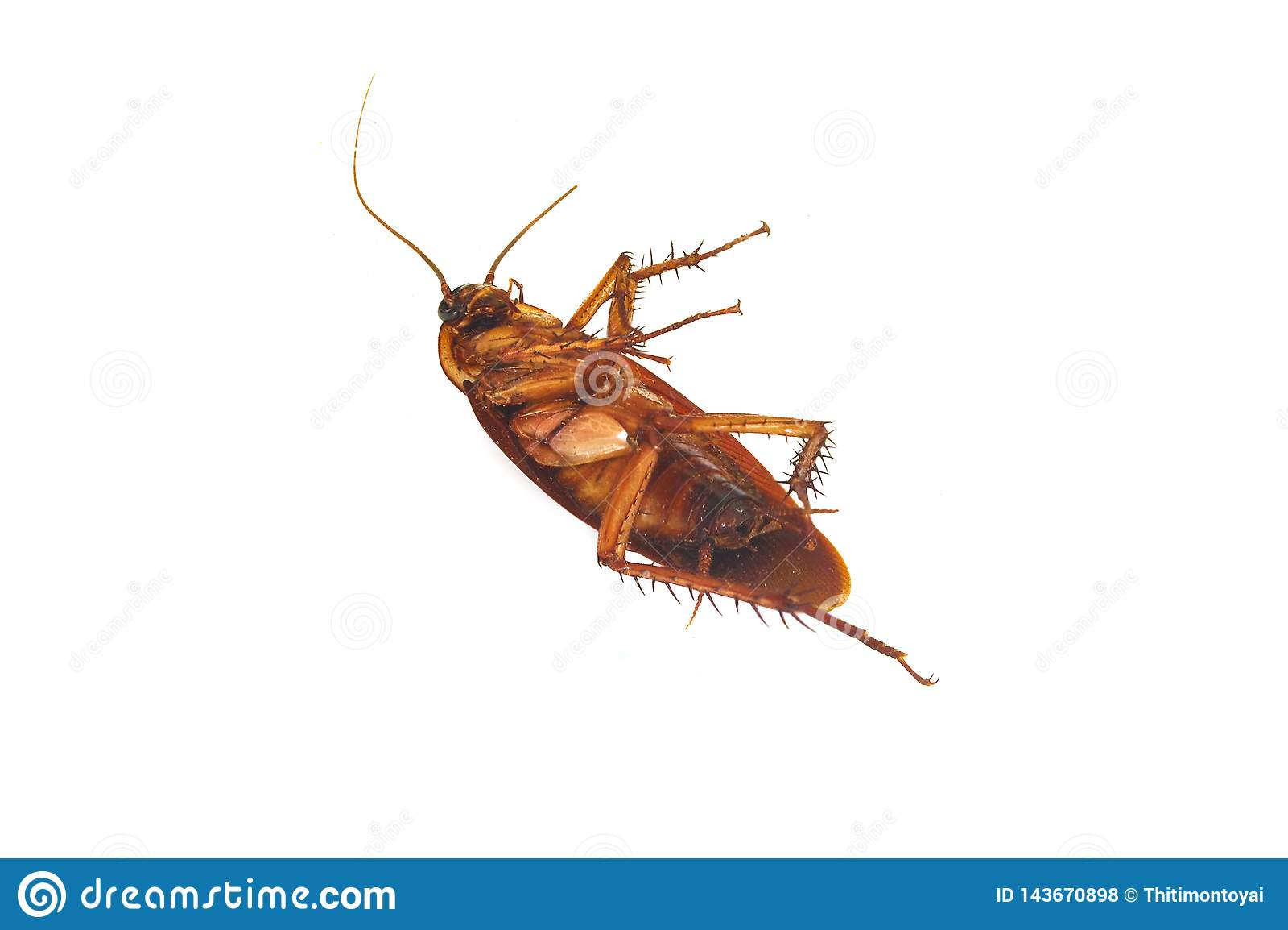 Dode kakkerlakken