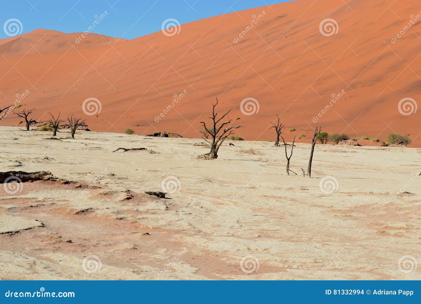 Dode Vlei, Namibië