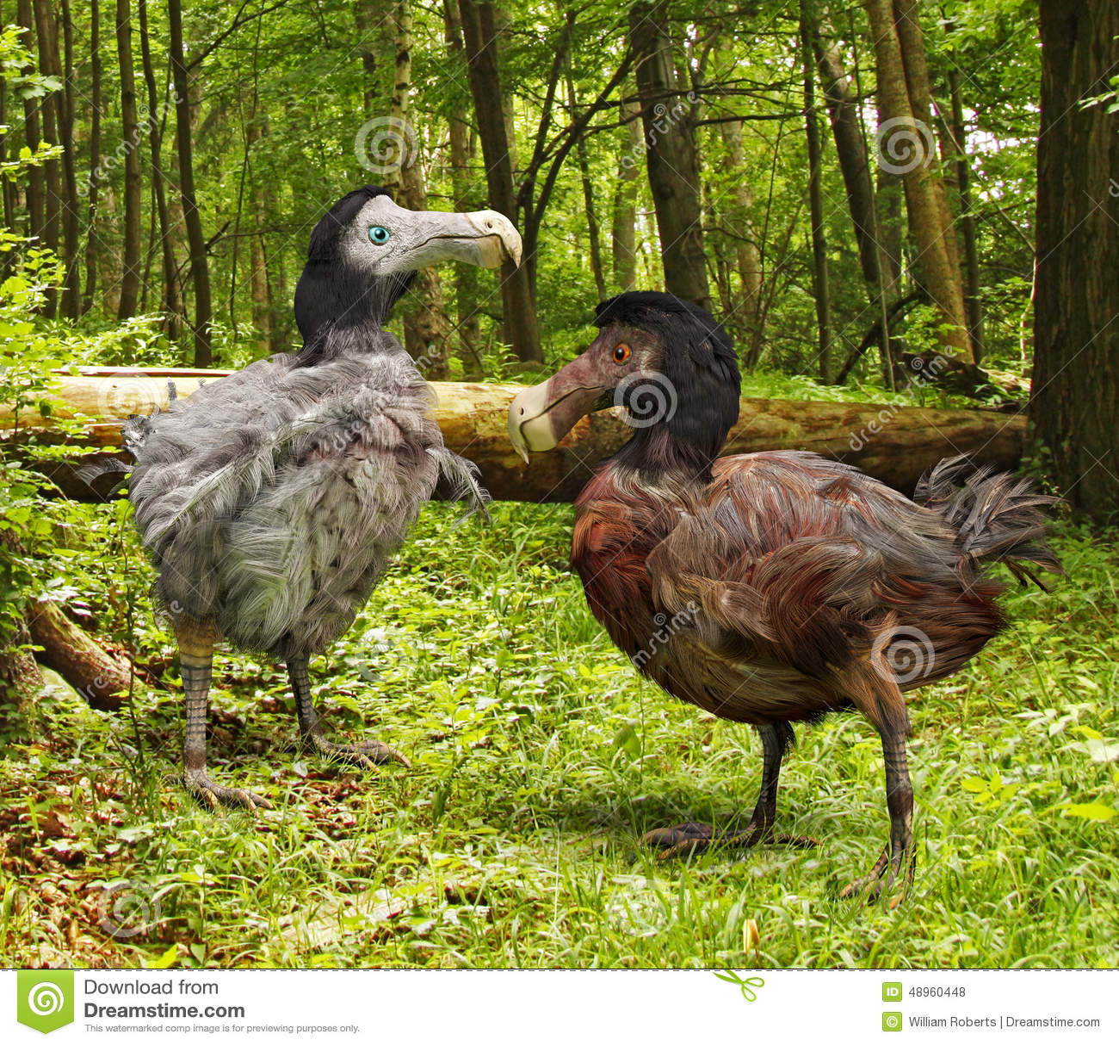 Dodo bird extinction date in Sydney