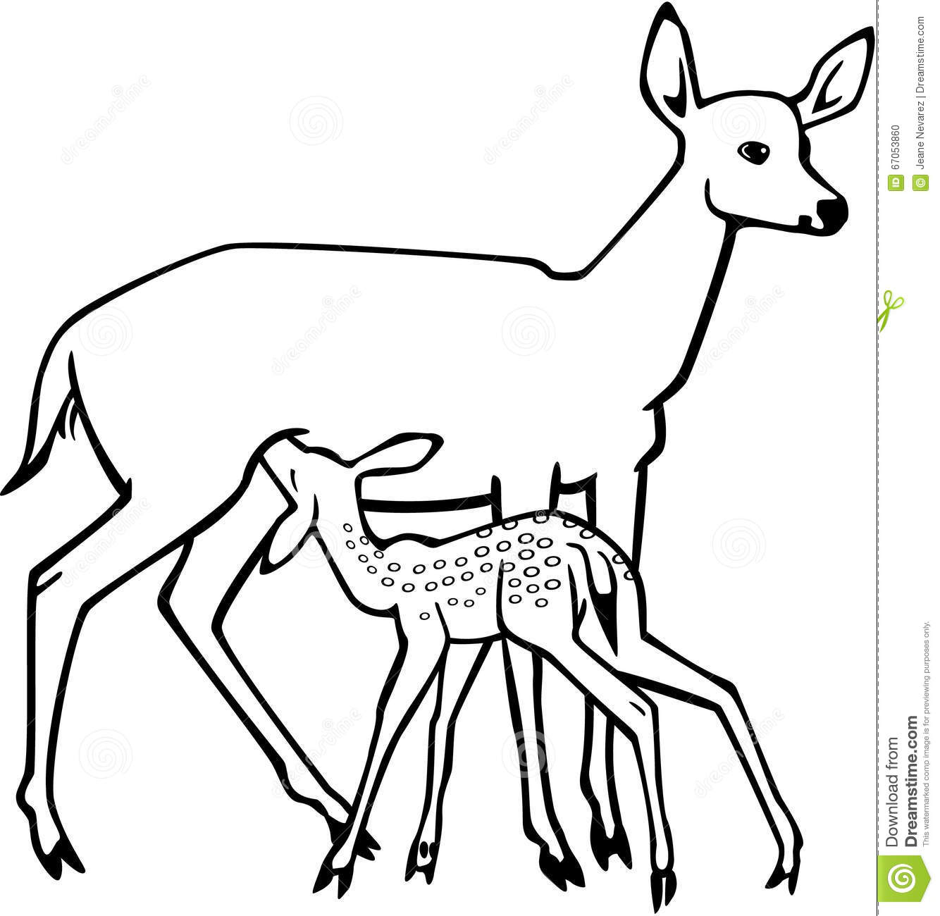 Deer Contour Line Drawing : Doe and nursing fawn stock vector image of