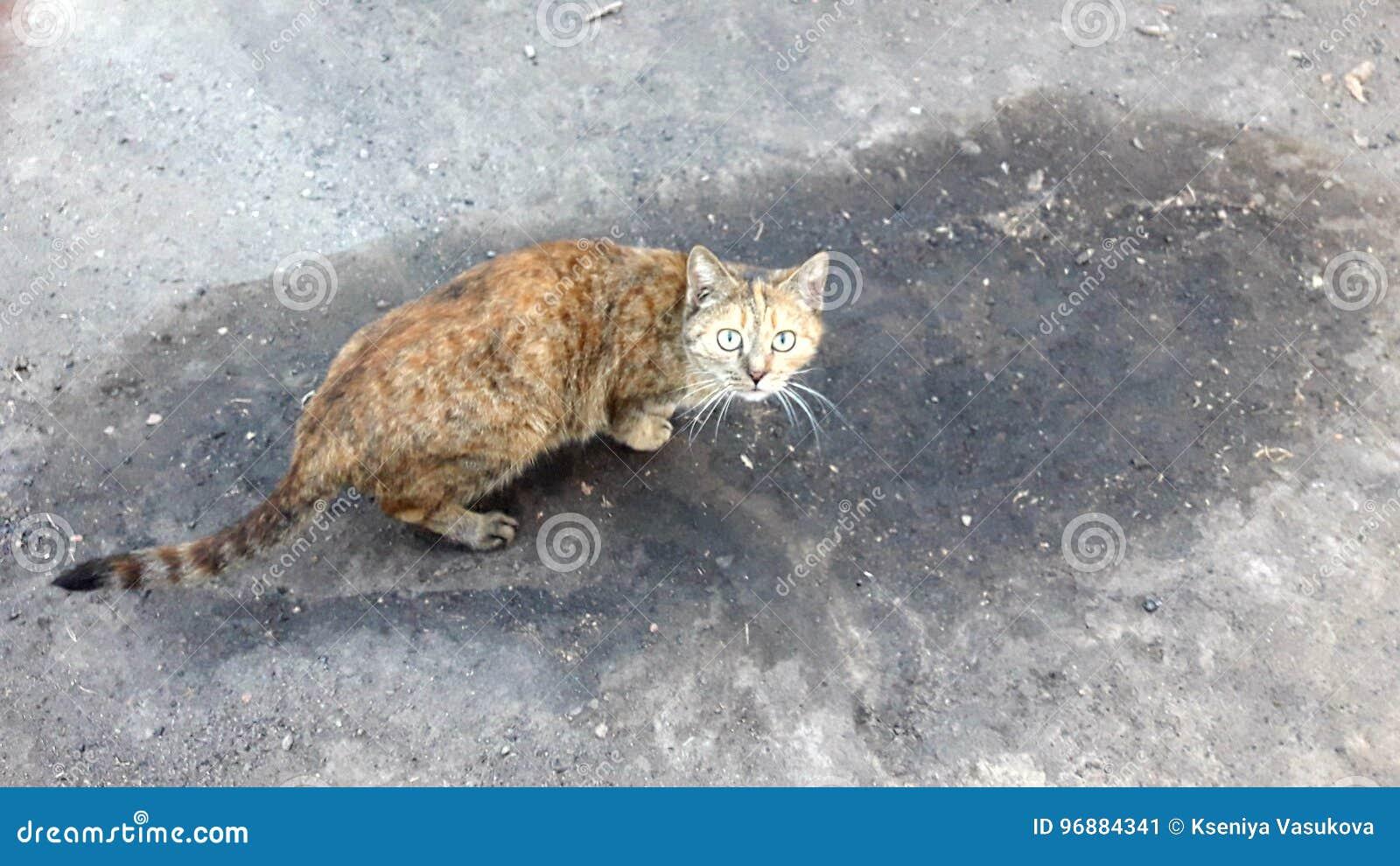 Doen schrikken kat
