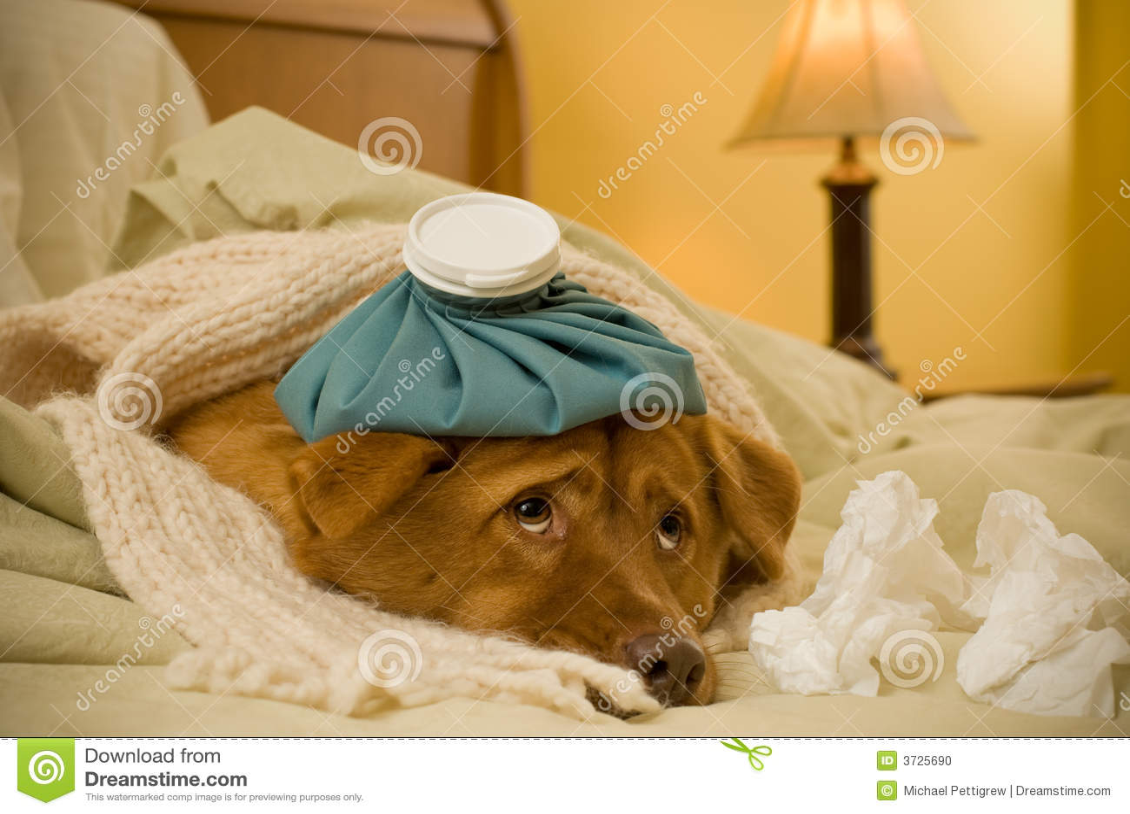Doente como um cão