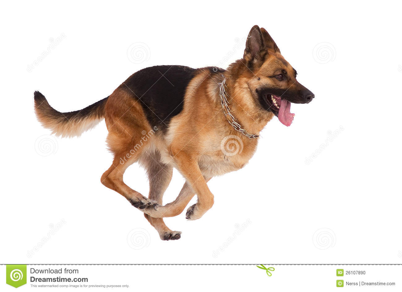 dog stock photo image of clear affectionate german