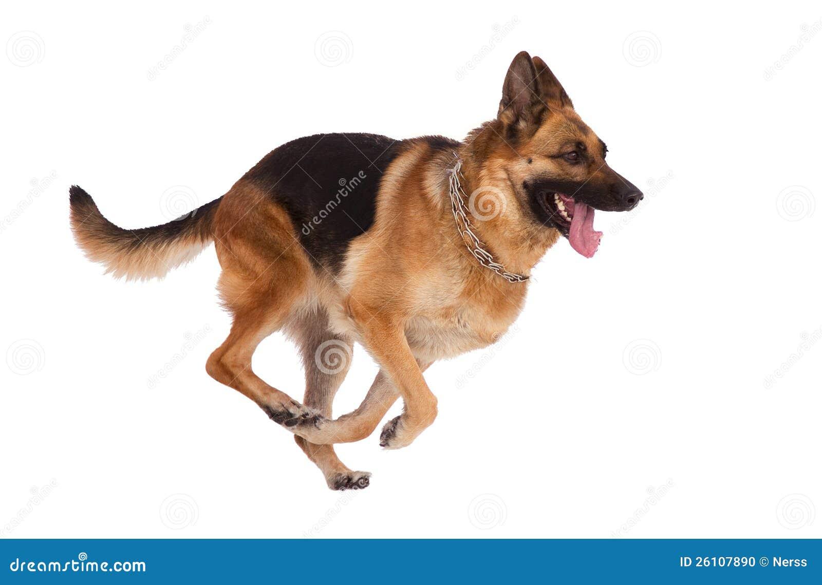Audio Dogs Barking Free
