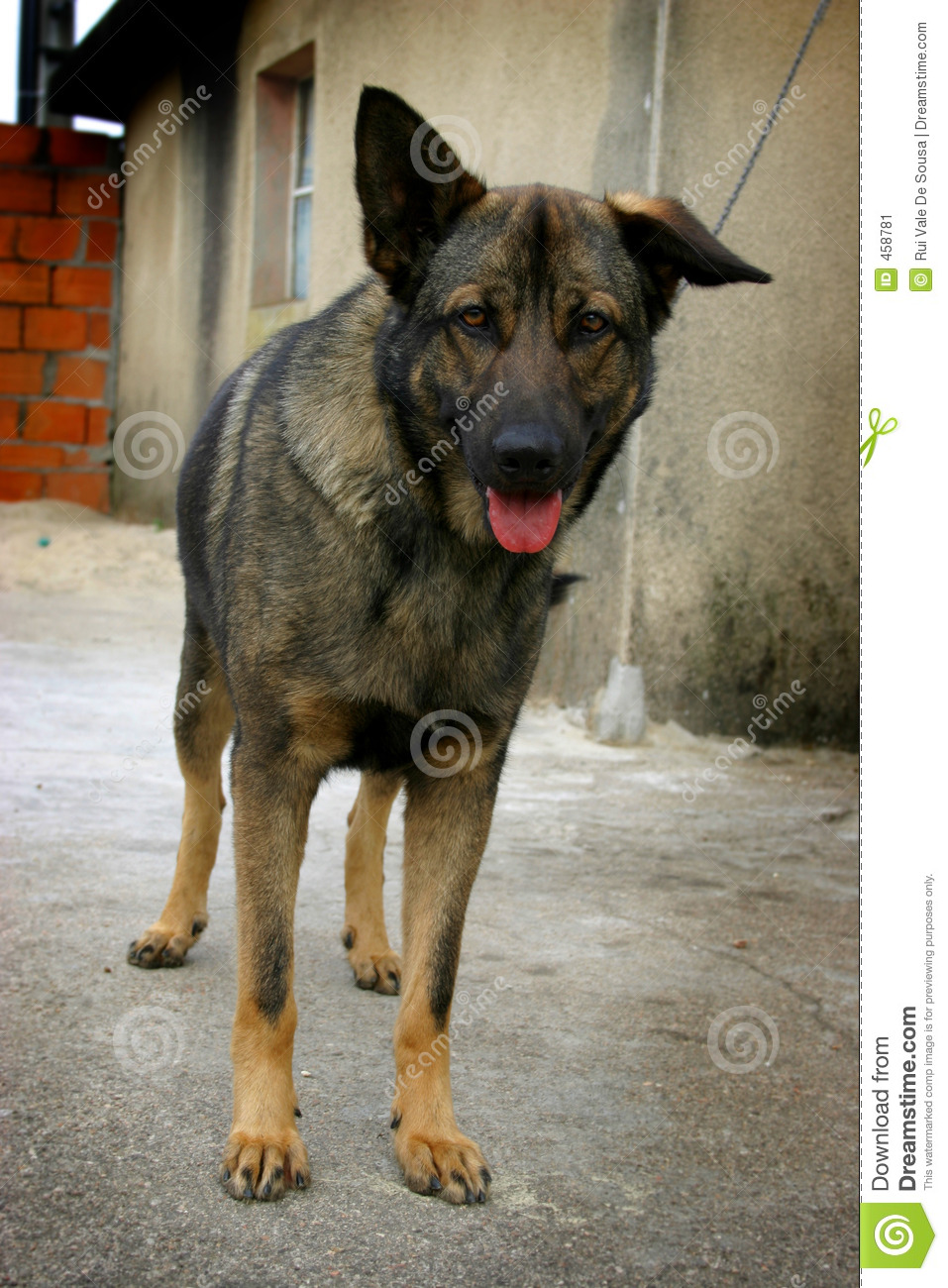 Download Dog stock image. Image of canines, animal, puppy, guard - 458781