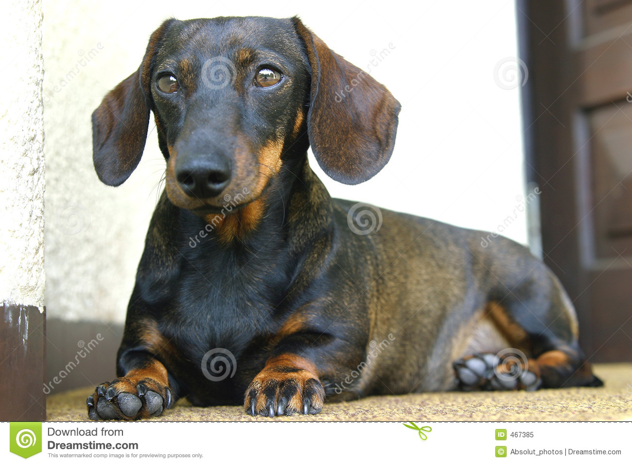 Download Dog stock image. Image of creature, domestic, mammal, look - 467385
