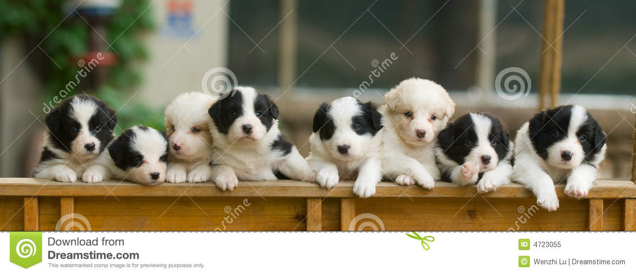 Puppy Dogs in a Row