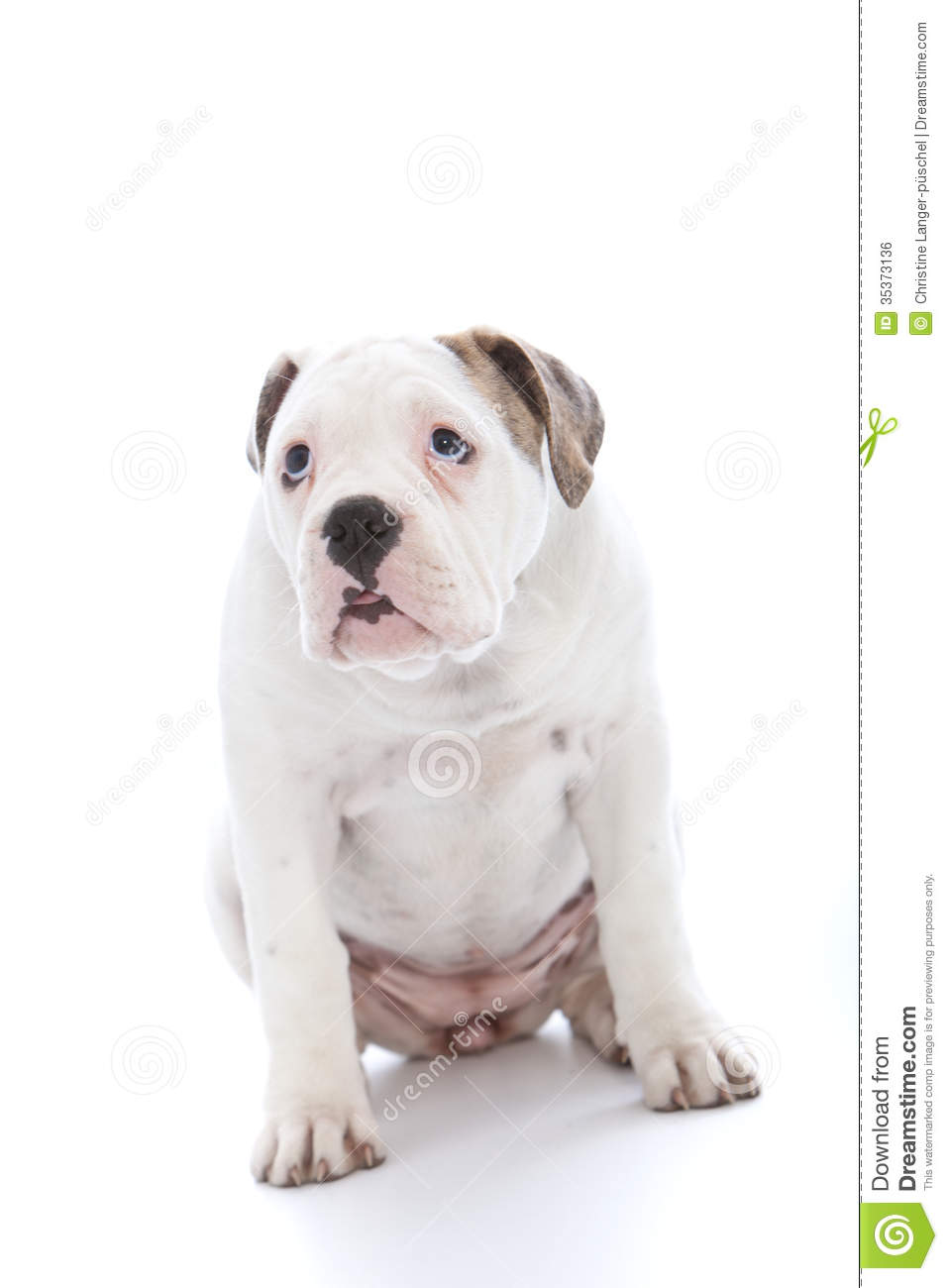 Dog With An Abject Expression Saying Sorry Stock Photo - Image of