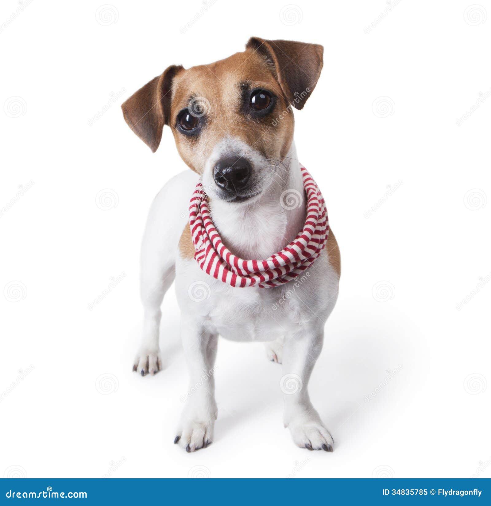 Dog Breed Jewelry
