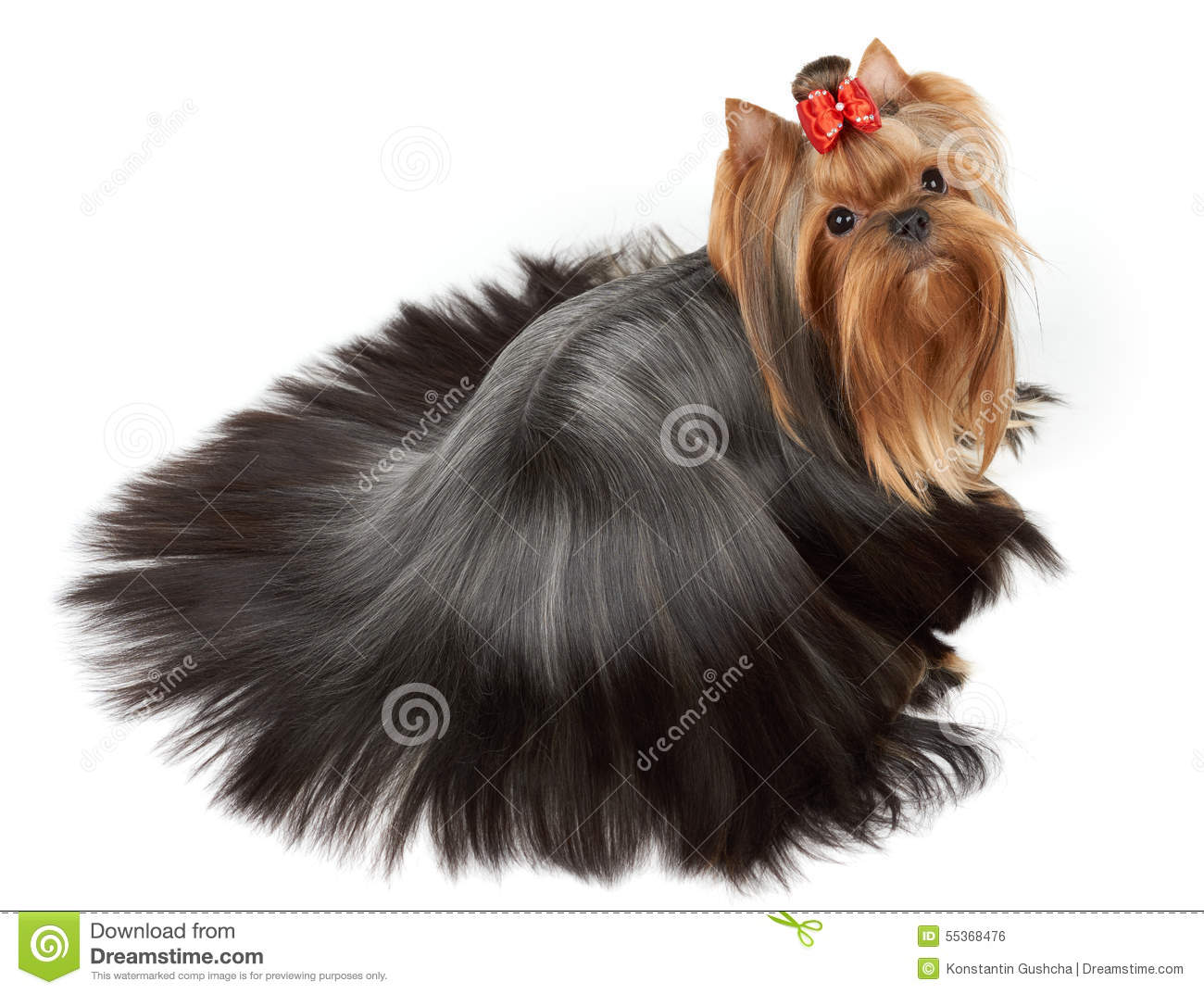Dog With Accurately Combed Hair Stock Photo Image Of Beauty
