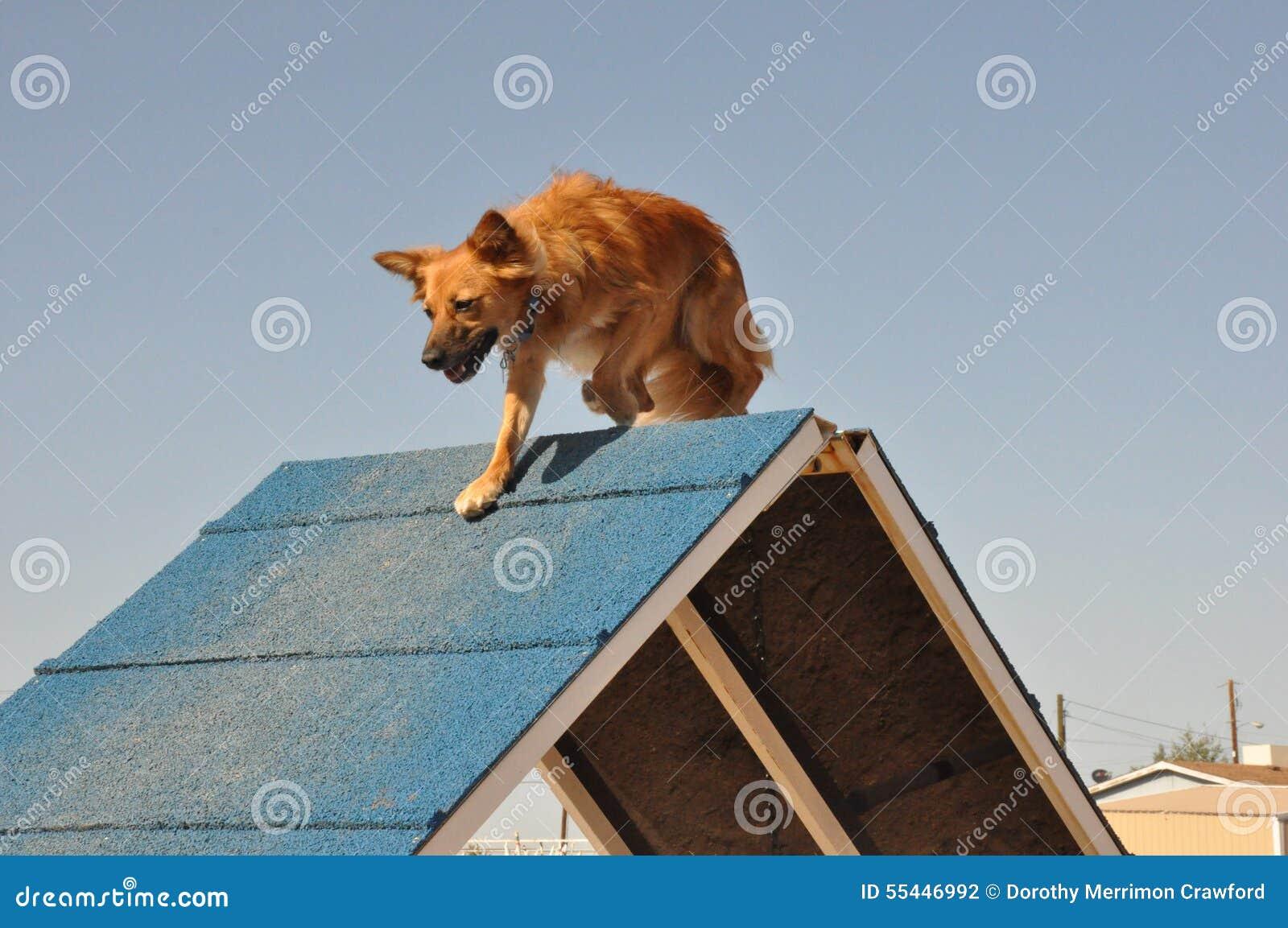 Dog Agility A-frame stock photo. Image of agility, dogsports - 55446992