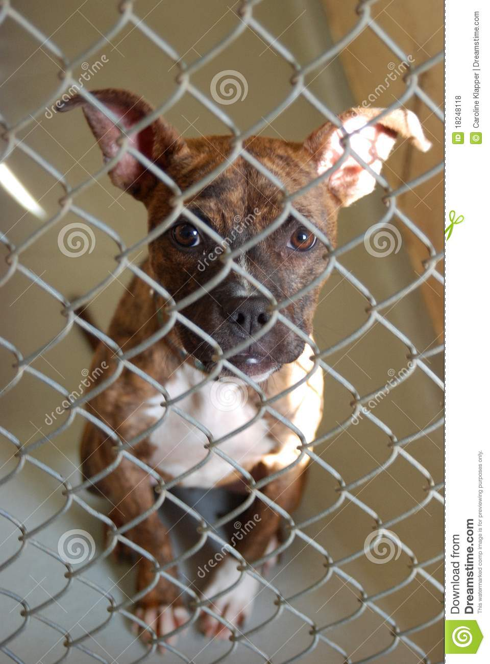 Dog In An Animal Shelter Royalty Free Stock Photos Image