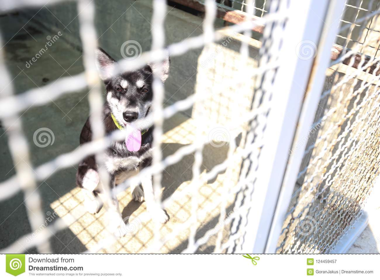 how to drop off a dog at the animal shelter