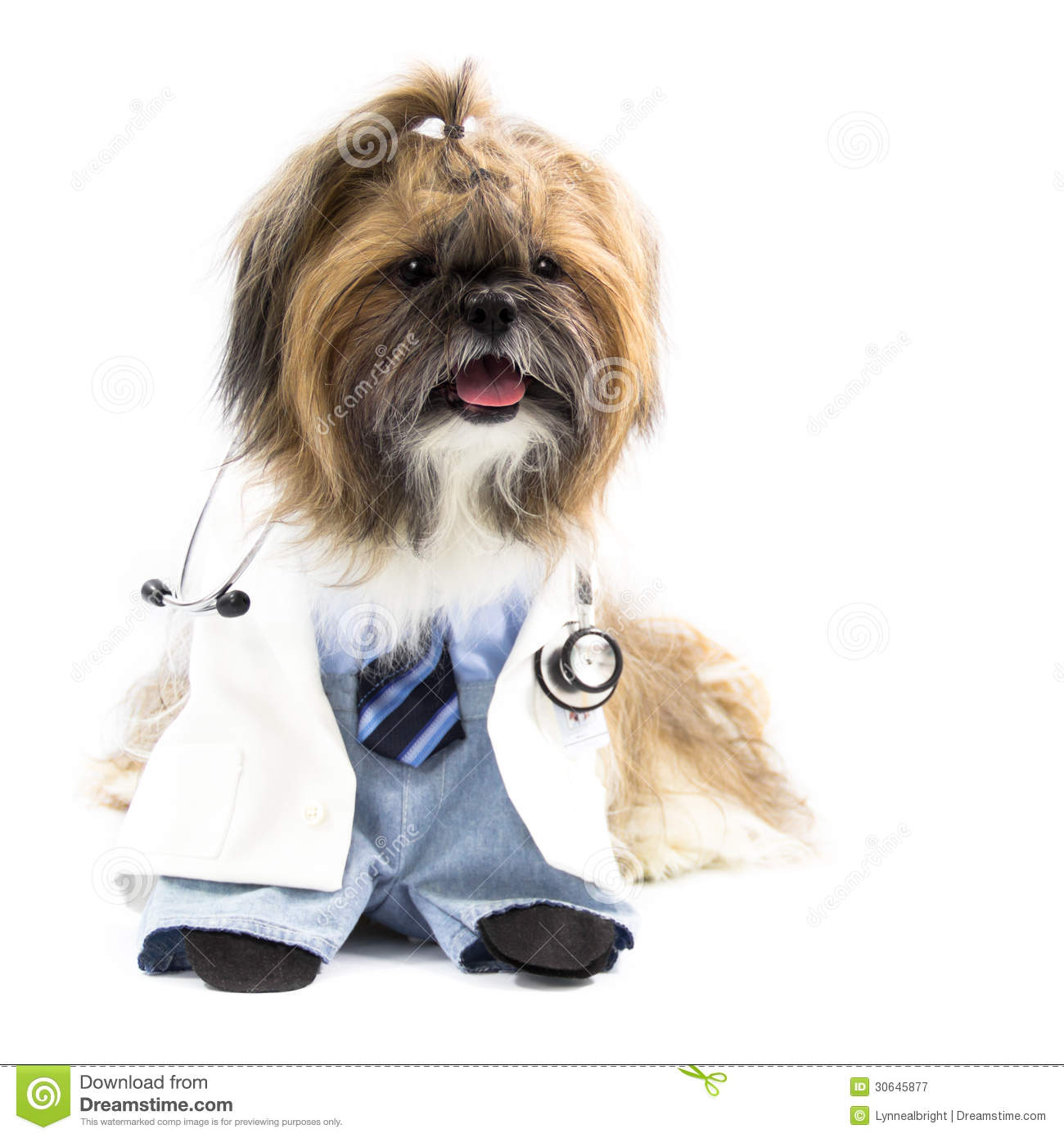 Dog as A Doctor stock image. Image of doctor, medical ...