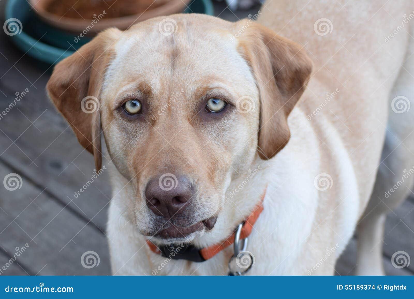 Dog with an Attitude