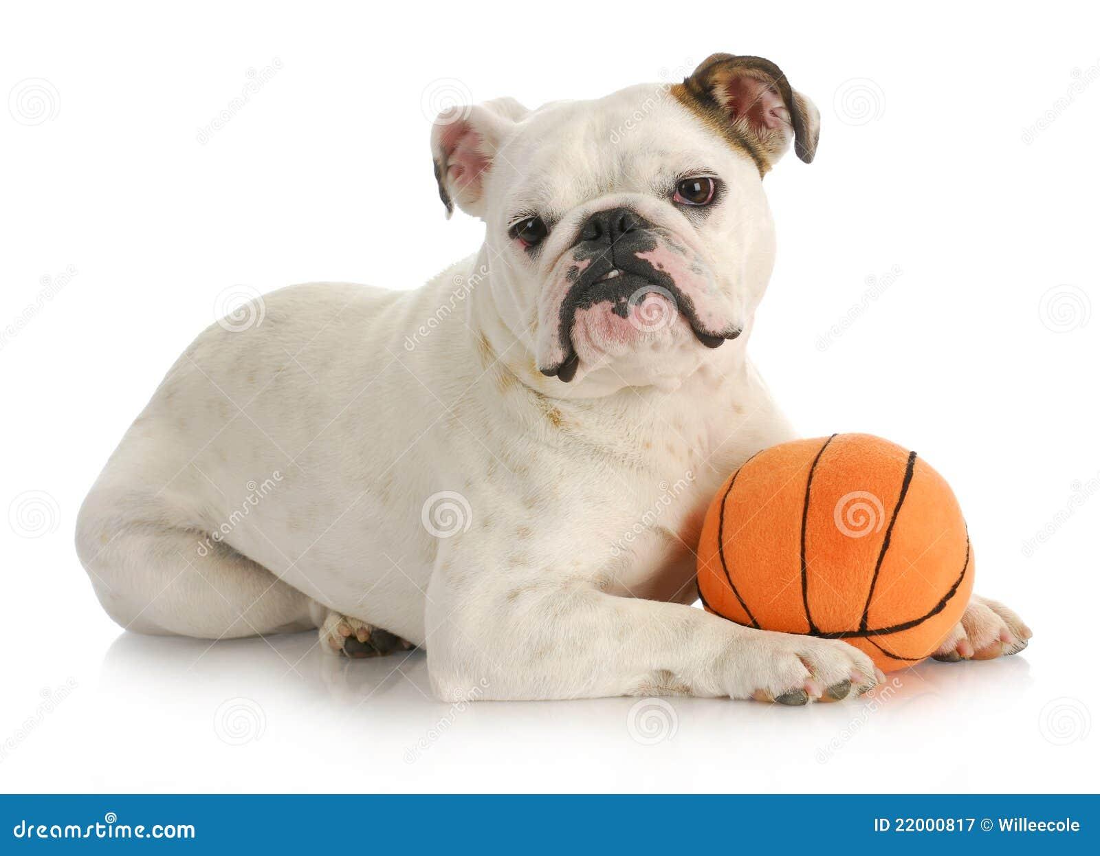 dog with ball royalty free stock photography image 22000817 english bulldog clipart free english bulldog clipart black and white