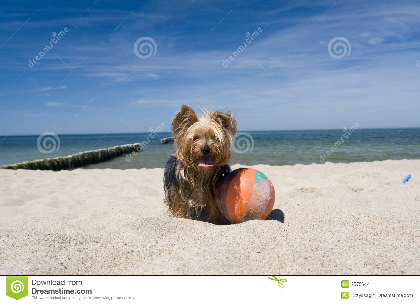Dog with ball on beach