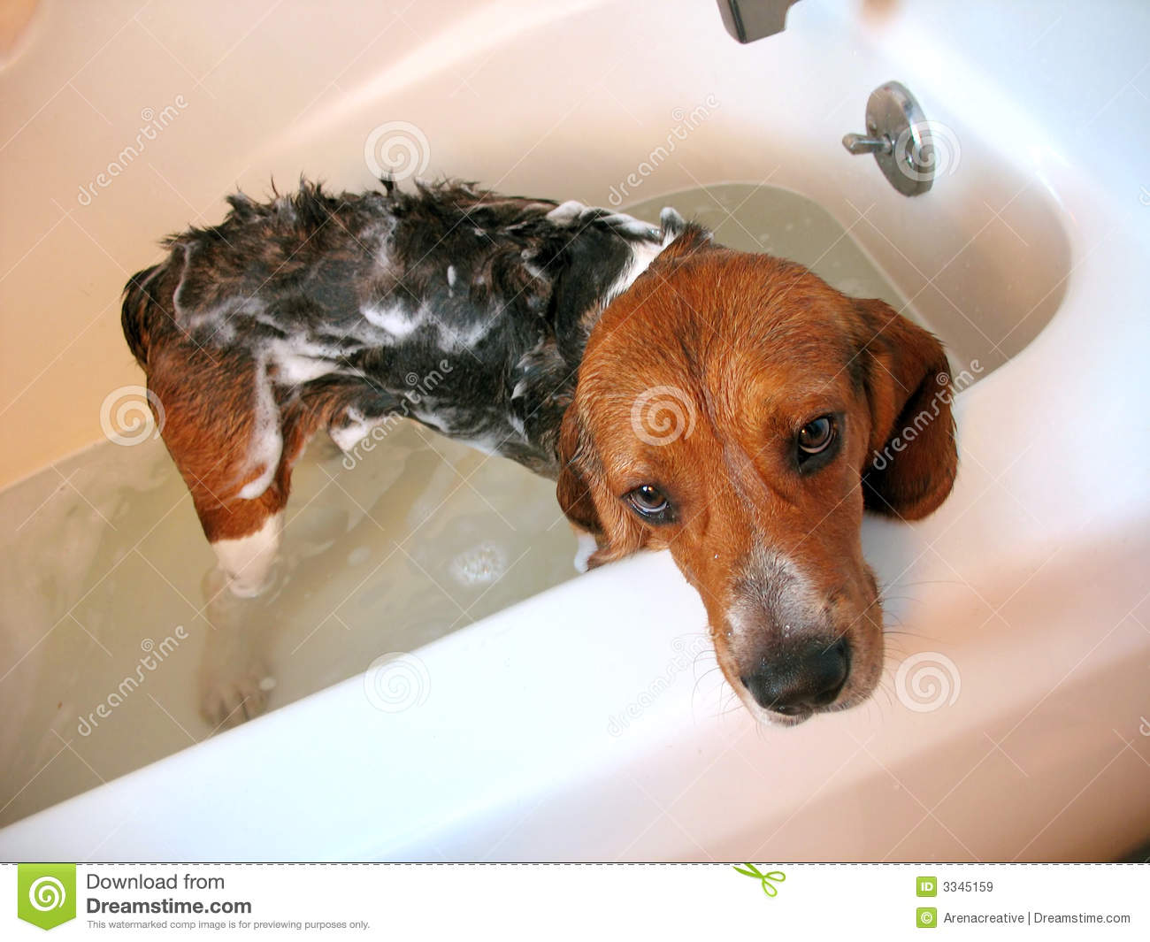 Dog Bath Stock Image Image Of Shower Cute Doggie Stand
