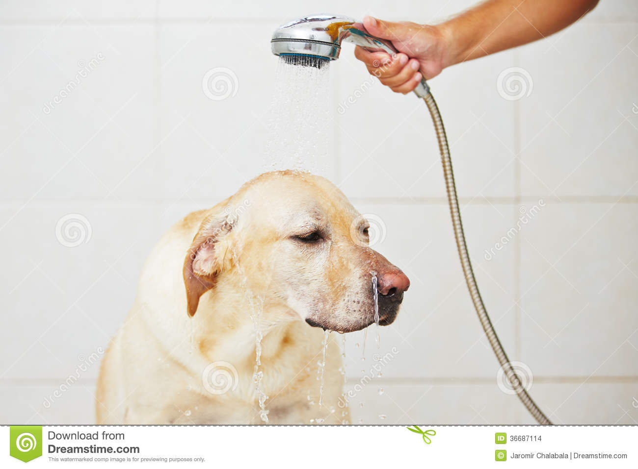 Dog In Bathroom Stock Images Image 36687114