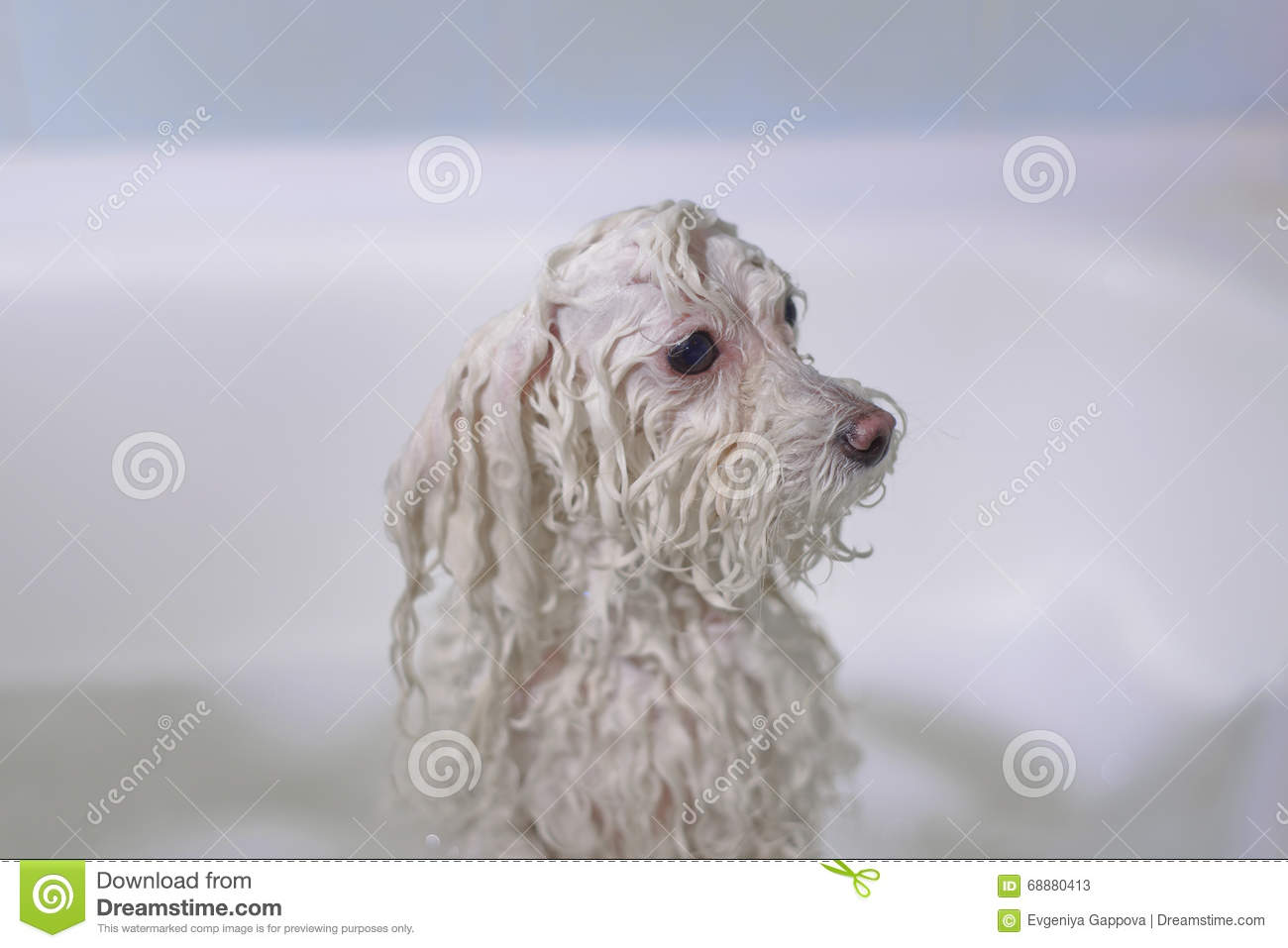 Dog In The Bathroom Stock Photo Image 68880413