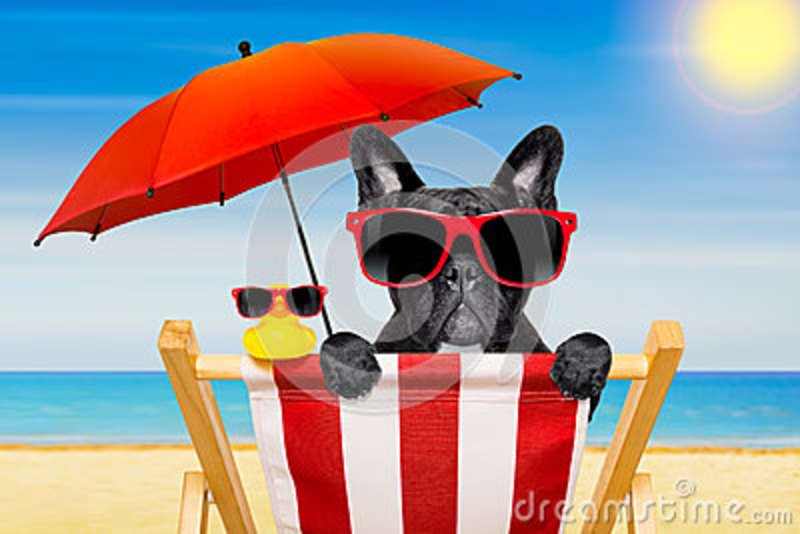 Dog Beach Chair In Summer Stock Image Image Of Summer