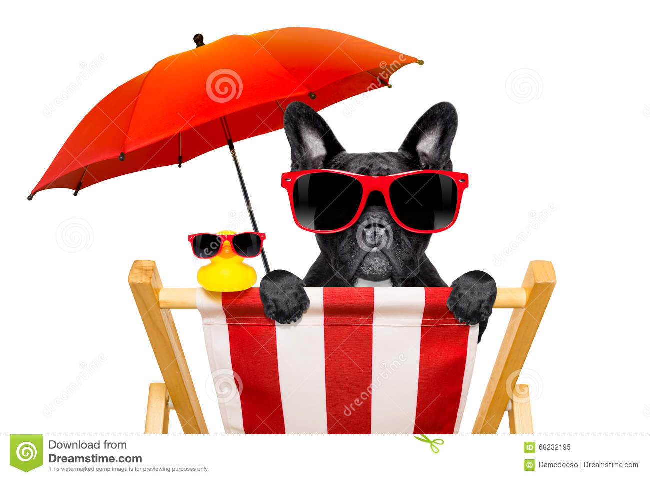 Dog Beach Chair In Summer Stock Image Image Of Happy
