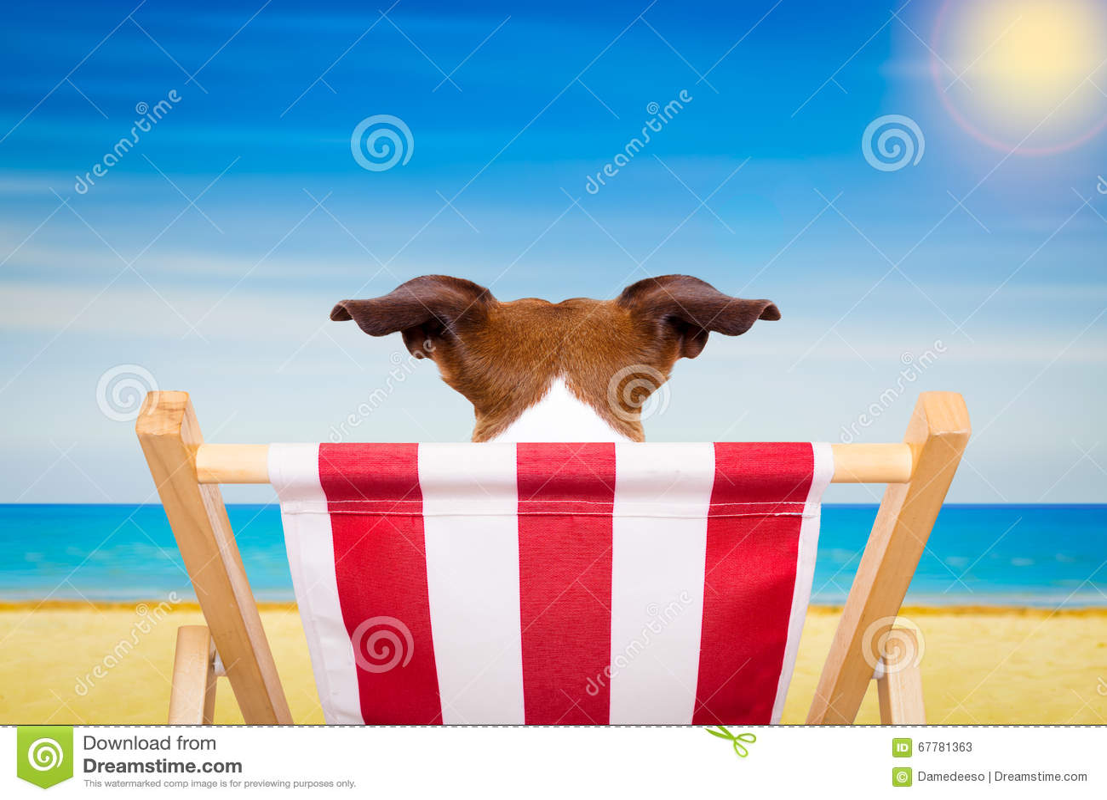 Dog In Beach Chair