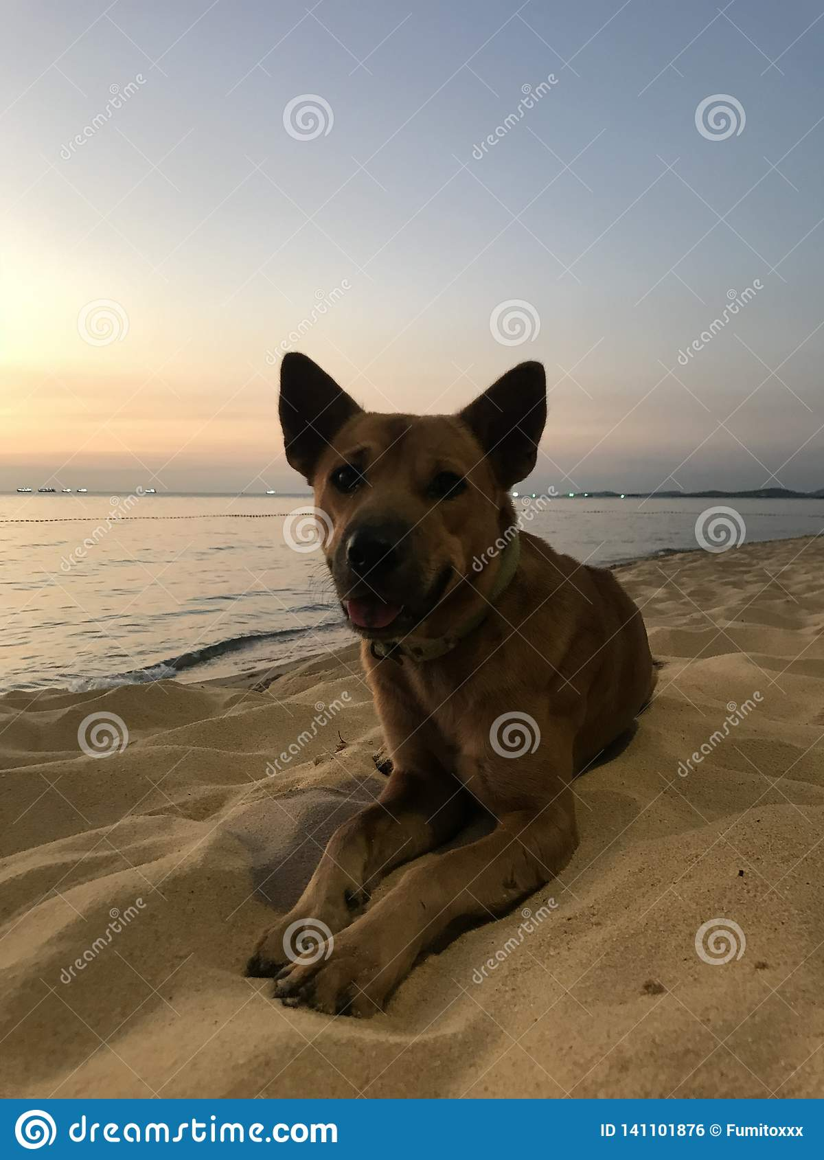 Dog on the beach at sunset