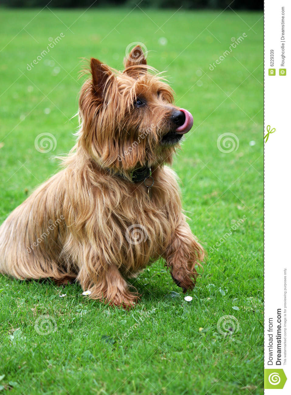 Breeds Of Dogs Begging With M