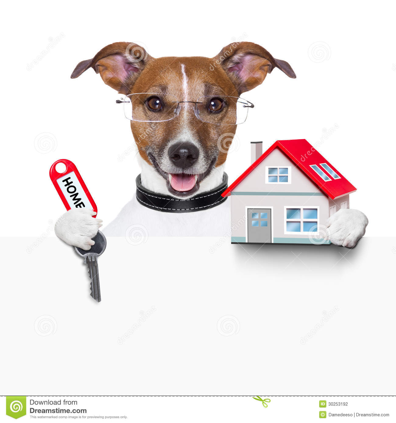Small Dog Property Investment