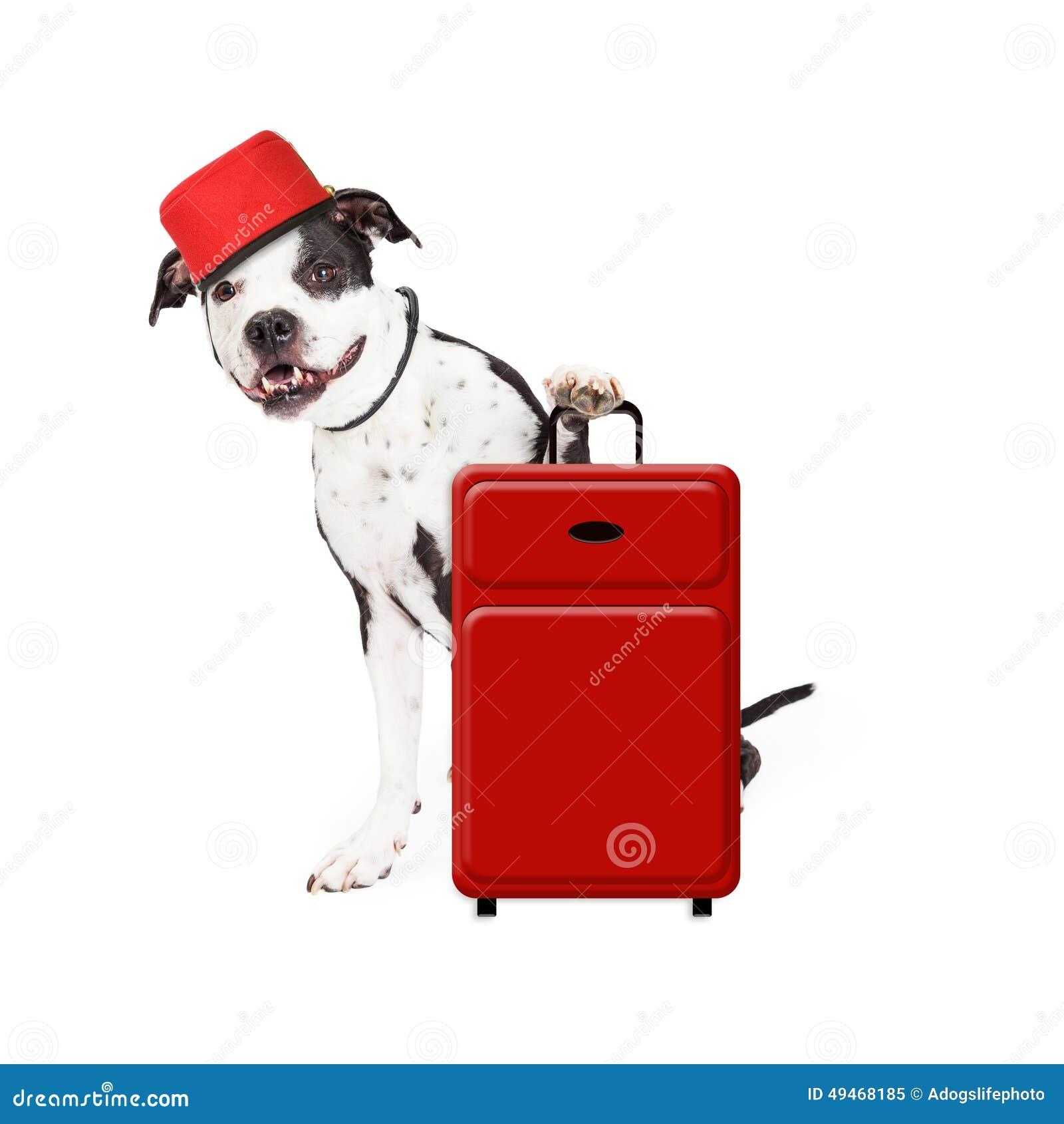 I  Motel Dog Friendly