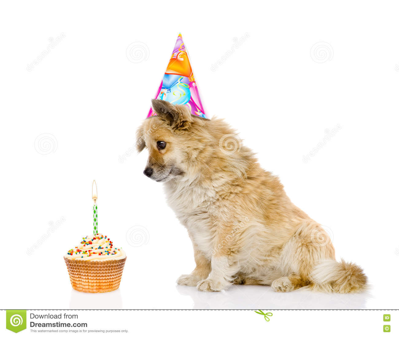 Dog With Birthday Hat And Cake Isolated On White Background