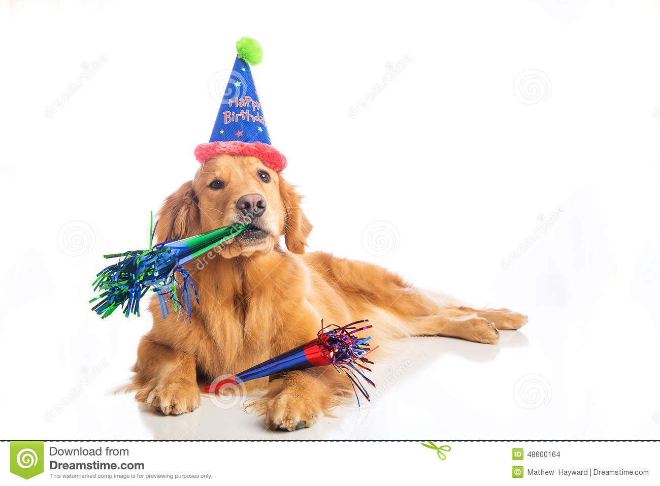 Dog Birthday Party Stock Photo Image Of Friend Cheerful 48600164