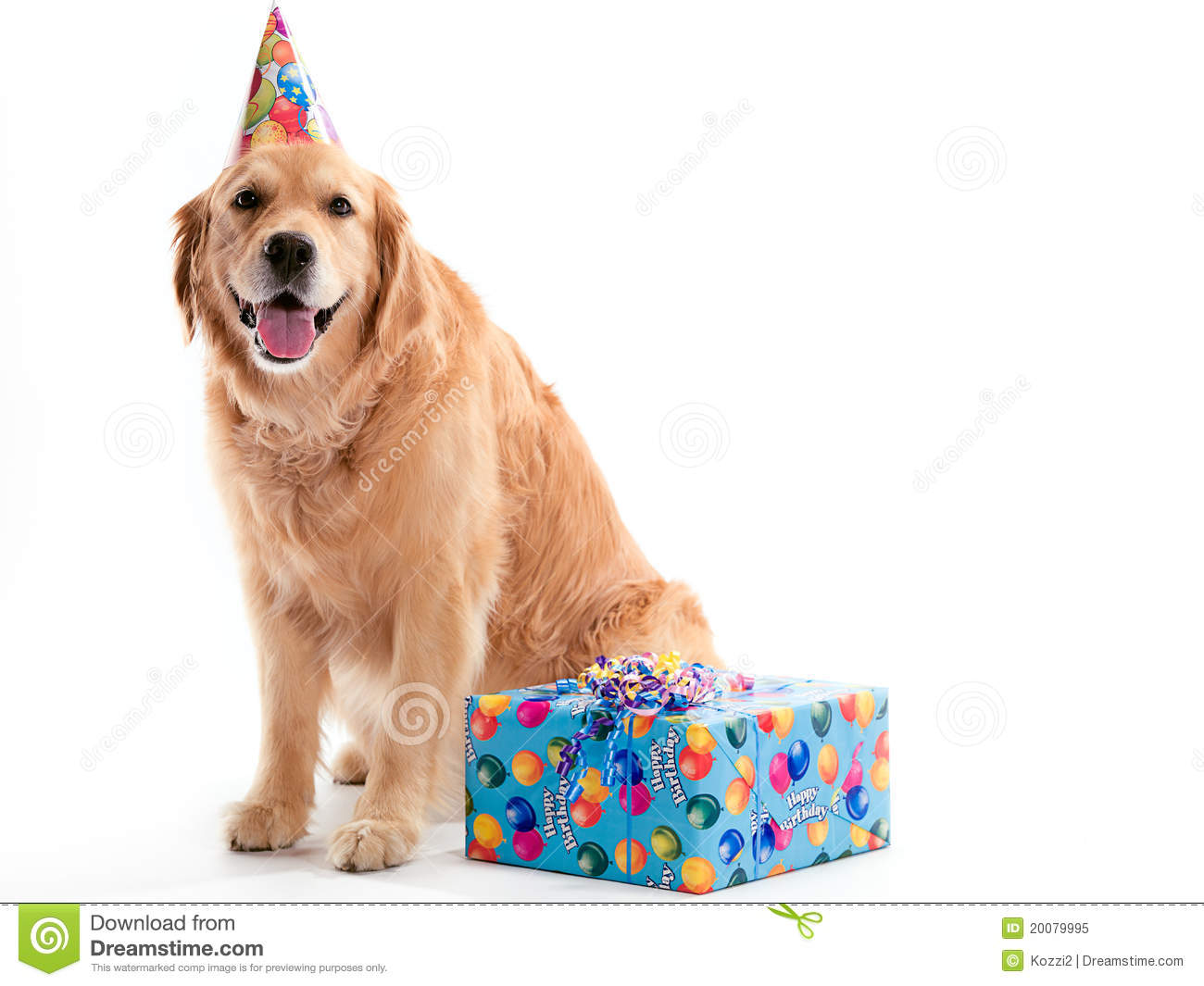 Dog with Birthday present  sc 1 st  Dreamstime.com & Dog with Birthday present stock image. Image of camera - 20079995