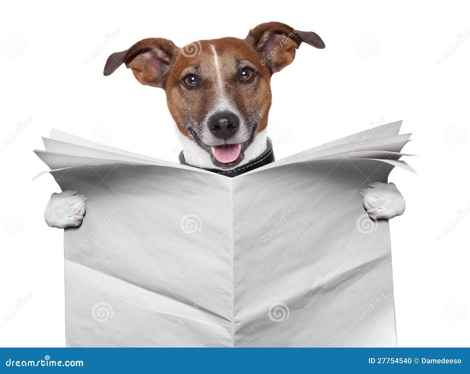 dog blank newspaper stock photo  image of brochure