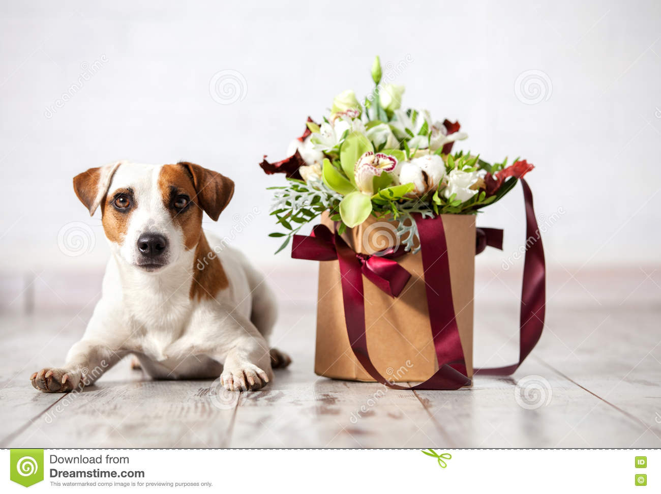 Dog With Bouquet Flowers On Floor Stock Photo Image Of Frame