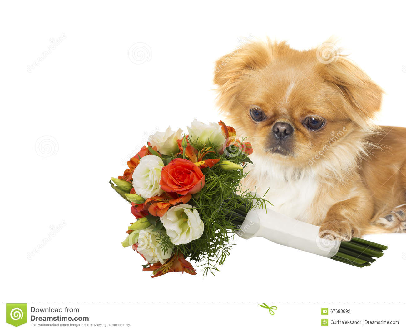 Dog With A Bouquet Of Flowers Stock Photo Image Of Isolated