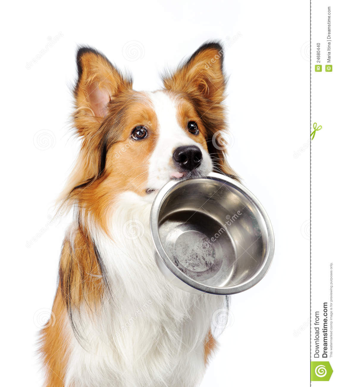 dog with bowl stock photo image 24680440 Border Collie Outline Border Collie Outline