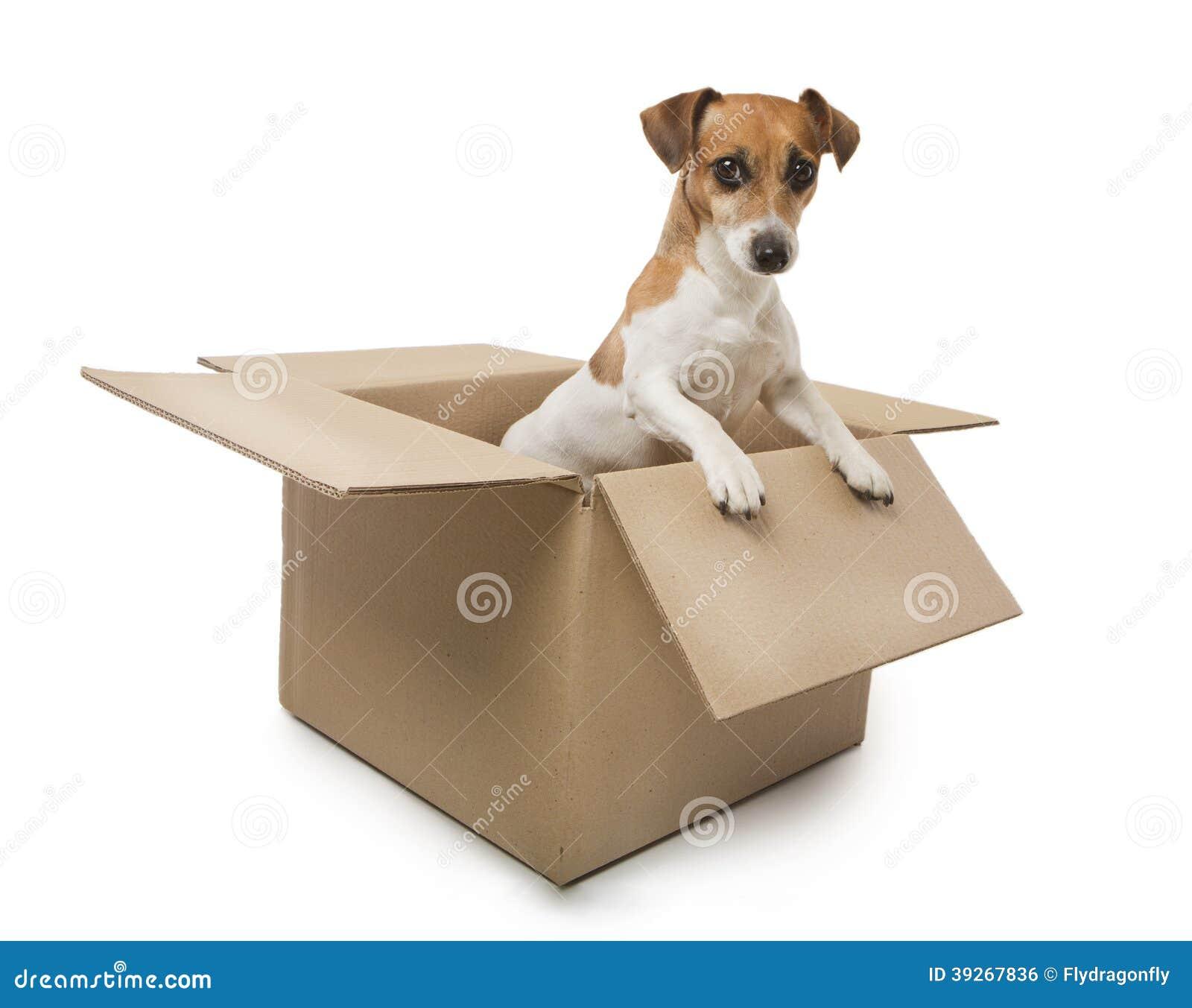 how to keep a dog inside the house