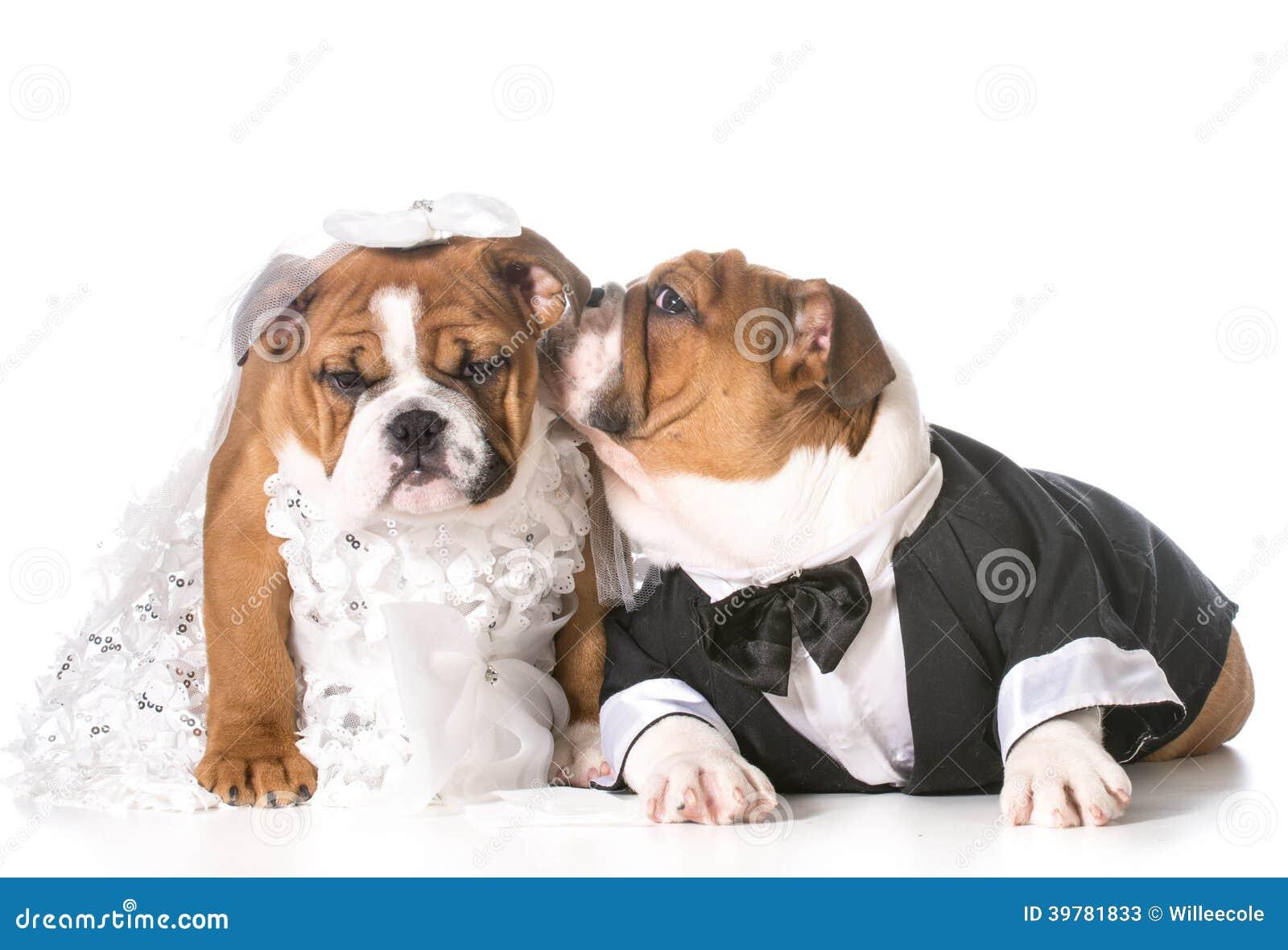 Royalty Free Dog Groom