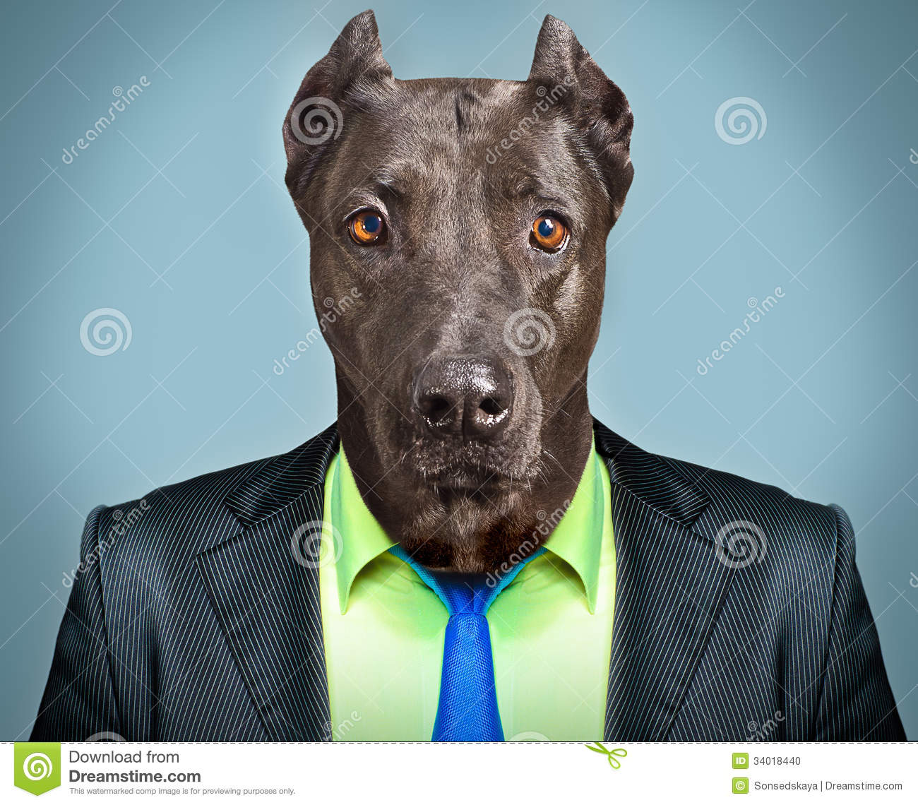 Dog in business suit
