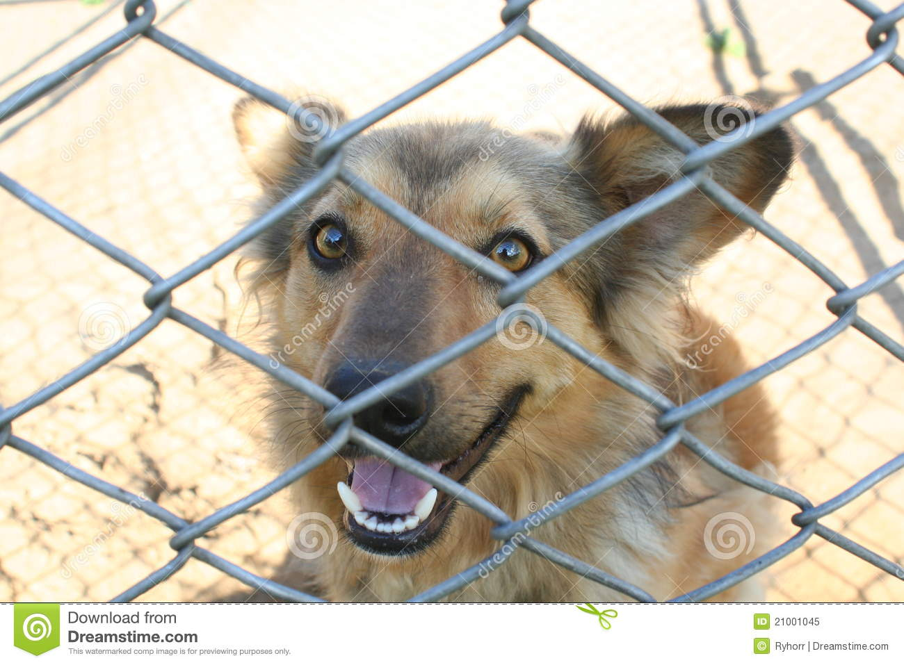 Royalty free stock photo dog in cage
