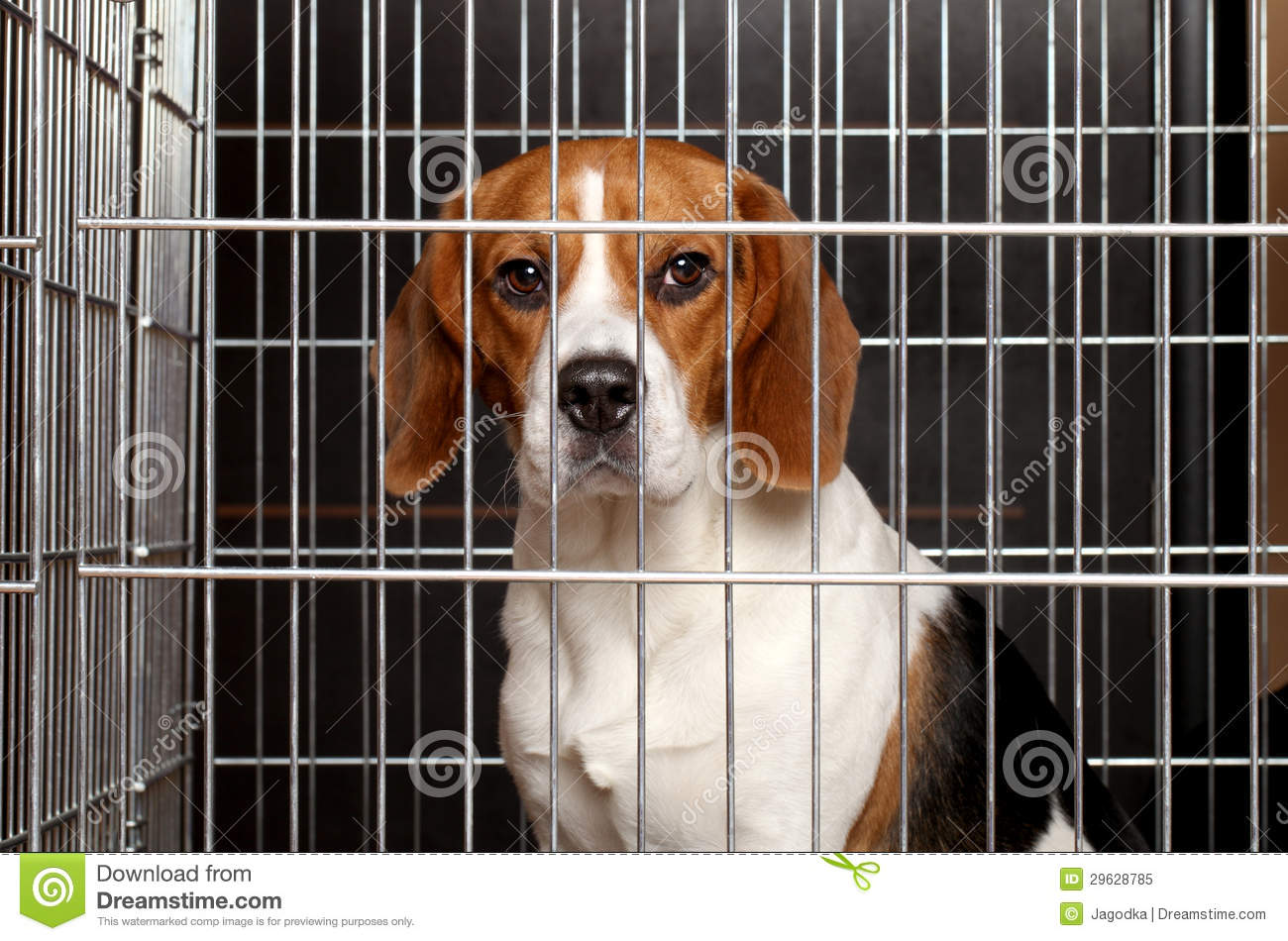 Dog In A Cage Royalty Free Stock Photo - Image: 29628785