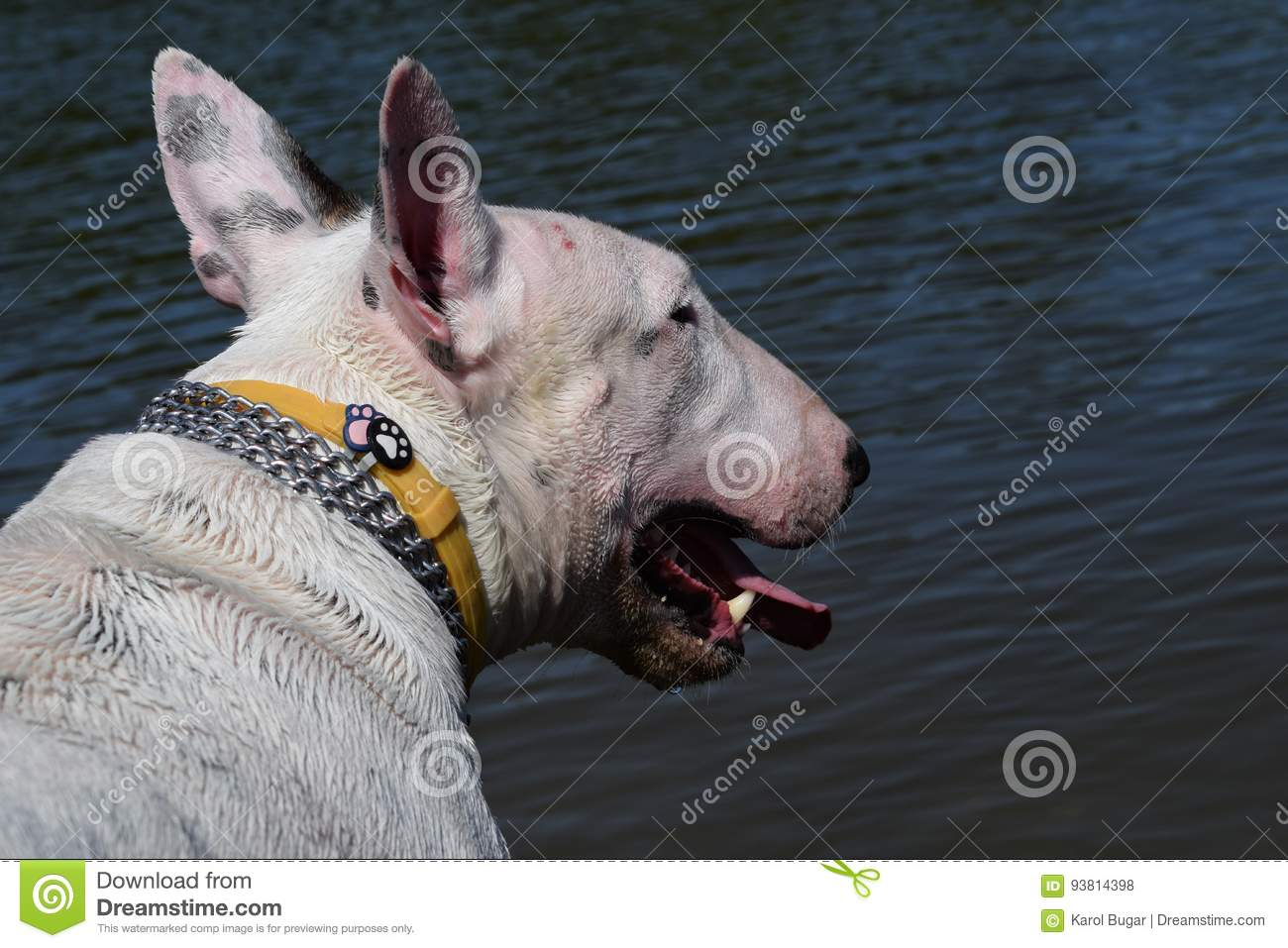 Dog stock photo  Image of river, game, wild, tree, pets